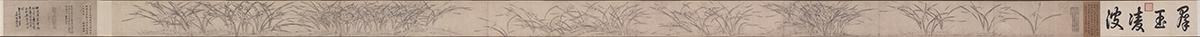 宋 赵孟坚 水仙图卷纸本24.5x670.2天津市艺术博物馆