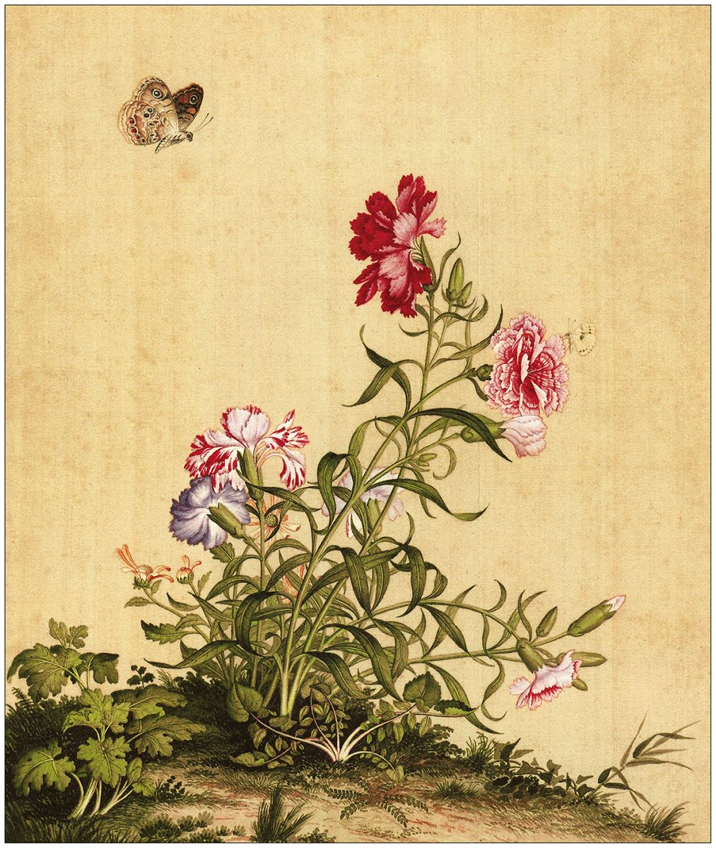 清 郎世宁 仙萼长春图-16张作品欣赏